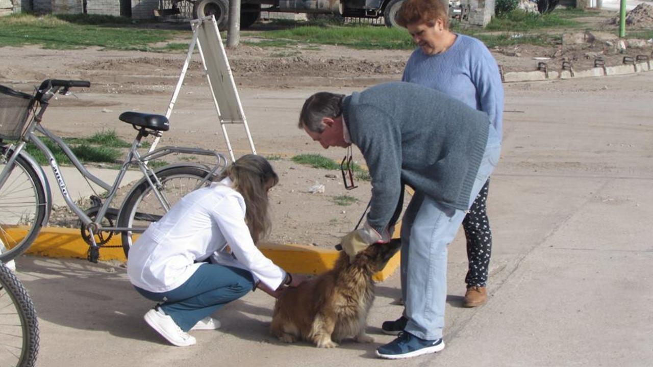 Vacunación Antirrábica de perros y gatos